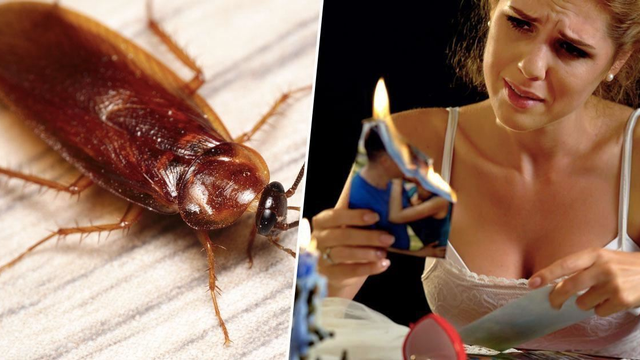 Hate Your Ex? You Can Now Name A Cockroach After Them For Valentine's Day!