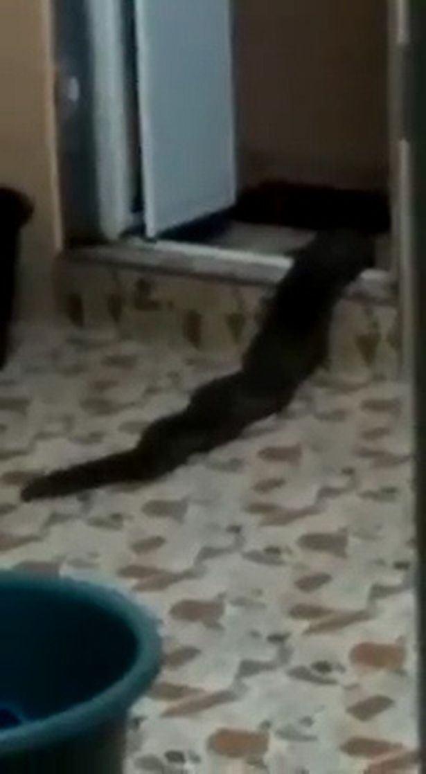 makhluk pelik merangkak keluar dari sebuah tandas rumah di kedah