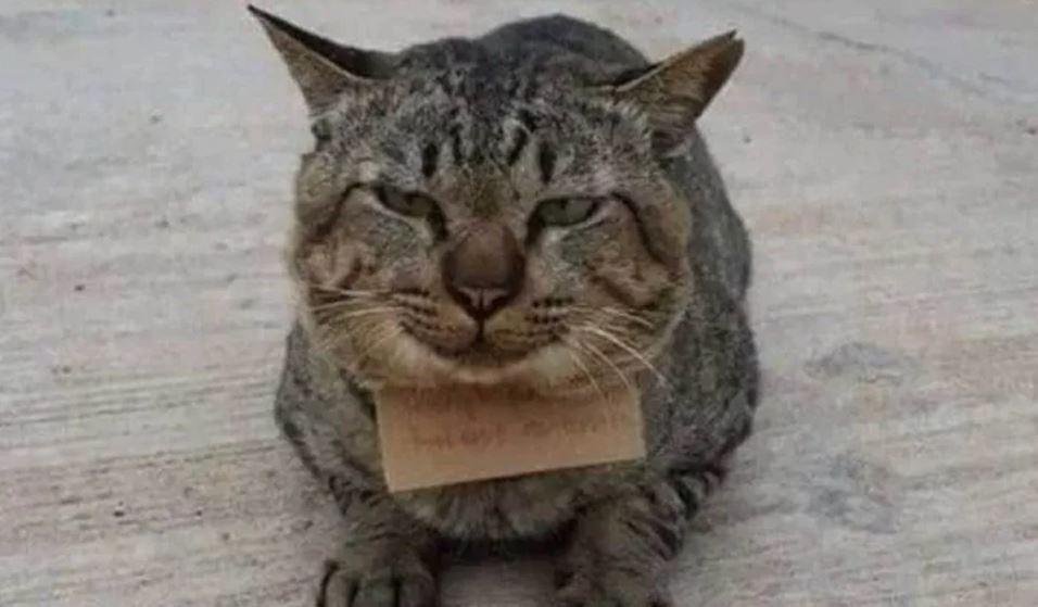 kucing hilang bawa balik nota tuntut hutang tiga ikan kembong