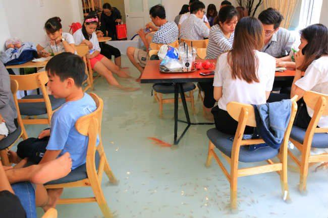 pelik tak bila makan di kafe ini sambil ikan hidup berenang di kaki?