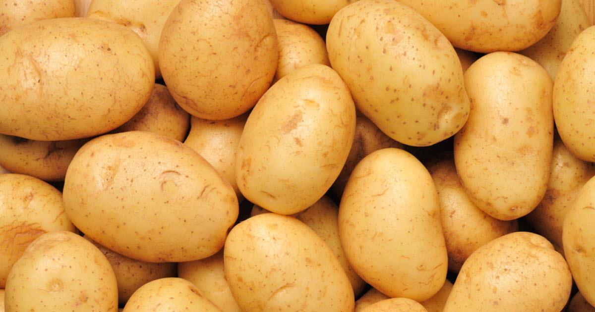 kentang rebus boleh guna untuk nyalakan mentol bilik selama 40 hari