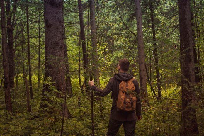 ini langkah yang perlu kita buat kalau rasa dah sesat dalam hutan