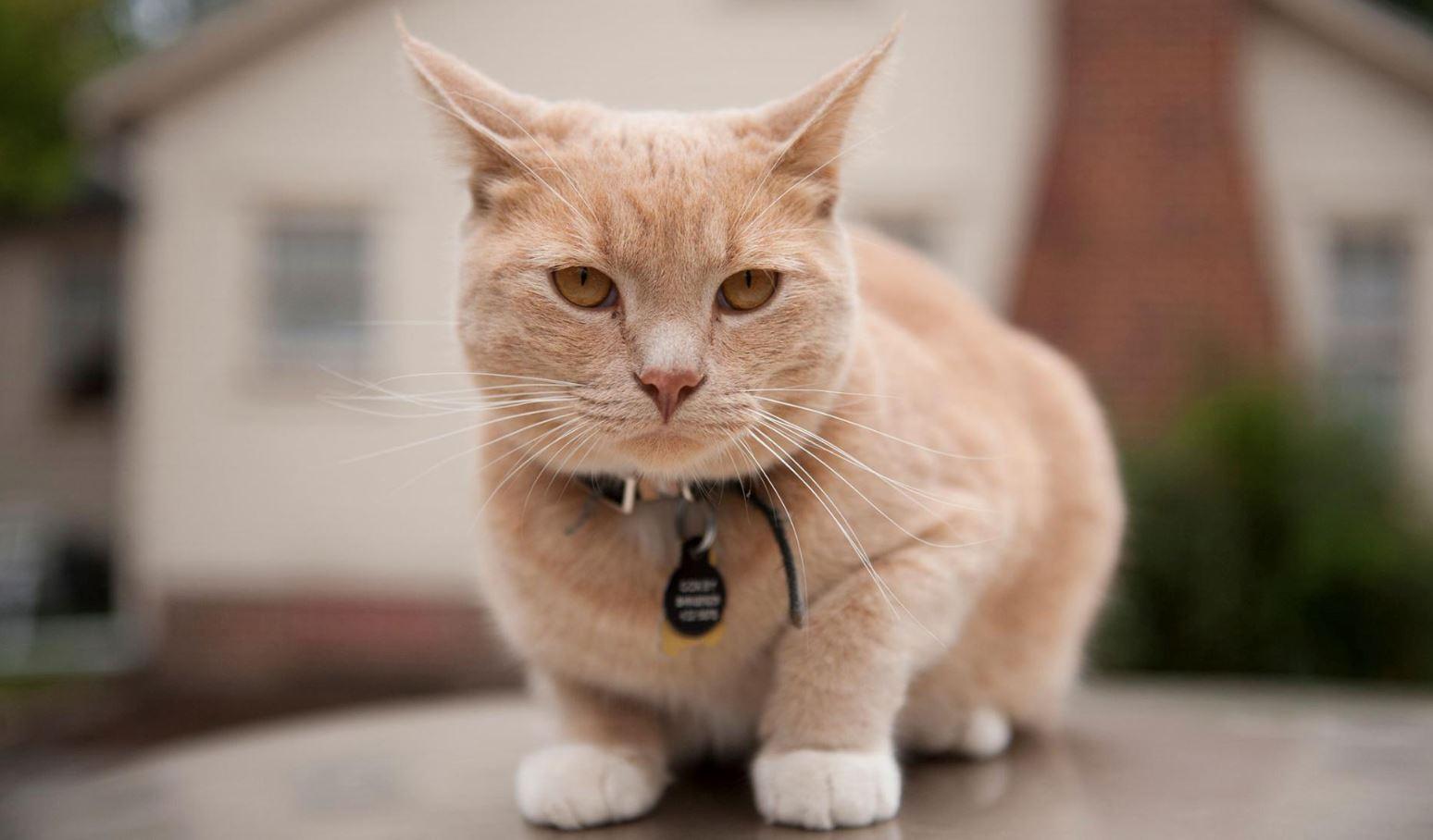 anda lebih senang kena penyakit jika kucing anda suka merayau