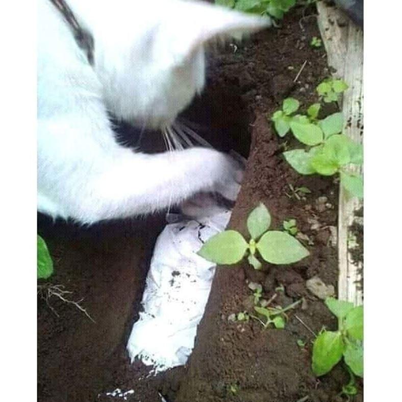 saat sedih ibu kucing beri kucupan terakhir pada anaknya yang dibunuh manusia