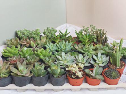 5 tumbuhan dalam rumah yang cantik dan mudah dijaga