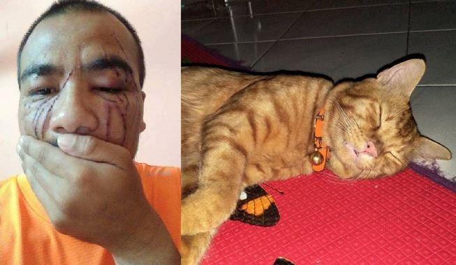 lelaki ini dicakar dengan teruk tetapi masih sayangkan kucing