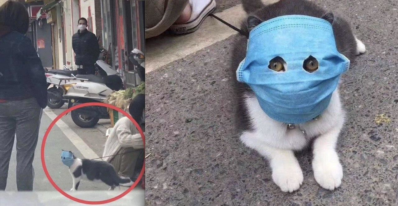this cat wearing a facemask is one of the best things on the internet now