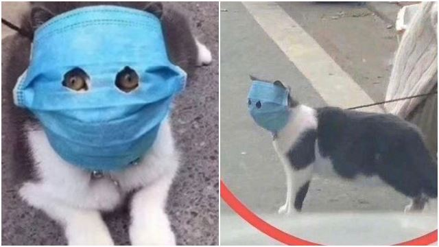 This Cat Wearing A Facemask Is One Of The Best Things On The Internet Right Now