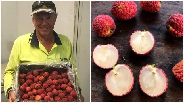 Farmer Successfully Grows Australia's First Seedless Lychee After 19 Years!