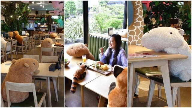 Japanese Zoo's Café Uses Stuffed Capybaras To Help Customers Practice Social Distancing