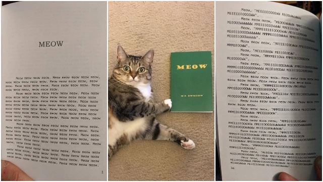 "Man Buys Discounted Book And Regrets It When All It Says Is ""Meow"""