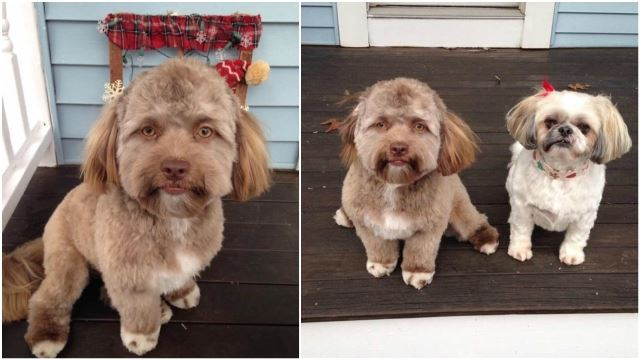 Netizens Are Freaked Out By This Dog That Has A Human Face