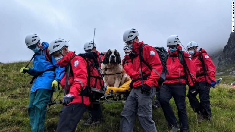 st bernard dog rescued from england's tallest mountain