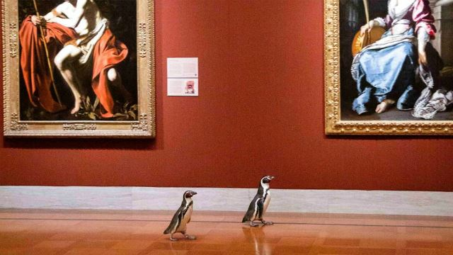 From The Zoo To The Art Museum