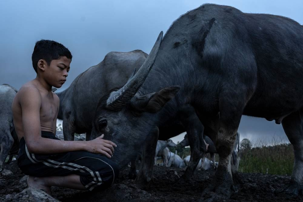 the famous kampung boy helps malaysian student to be shortlisted in prestigious photo awards