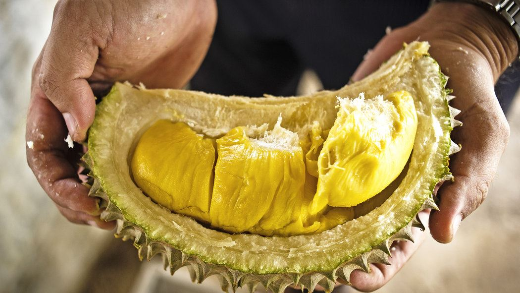 Durian Has A Spot In The 'Disgusting Food Museum' Of Sweden