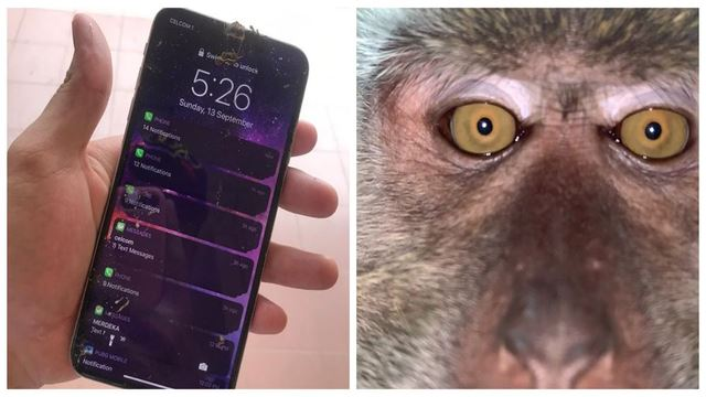 Man Who Lost Phone To 'Monkey Business' Got It Back With A Series Of Useless Selfies