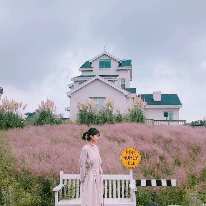 秋日少女心!济洲岛十月限定梦幻粉红芒草海