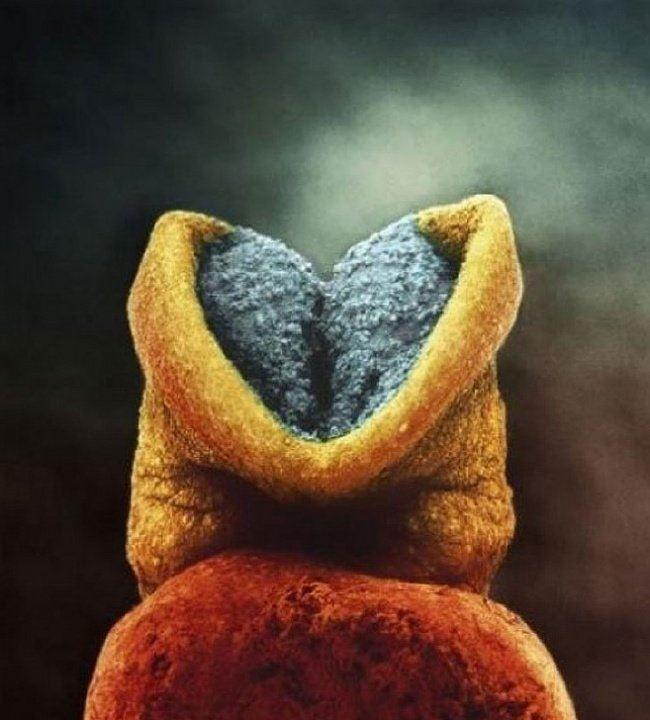 hebatnya kuasa allah, 21gambar pertumbuhan janin dalam perut  yang menyentuh kalbu