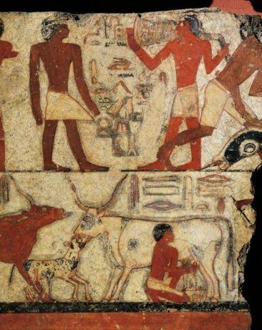 susu merupakan racun buat manusia zaman dahulu