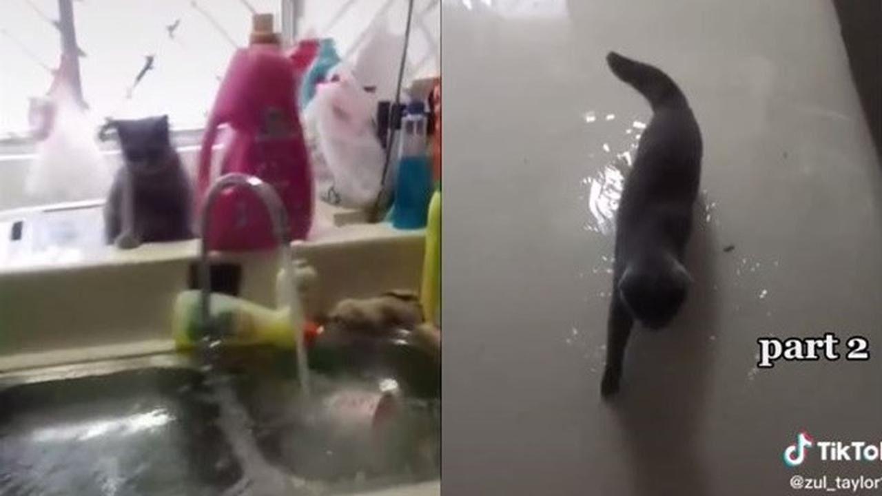kucing main paip air, rumah bertukar banjir
