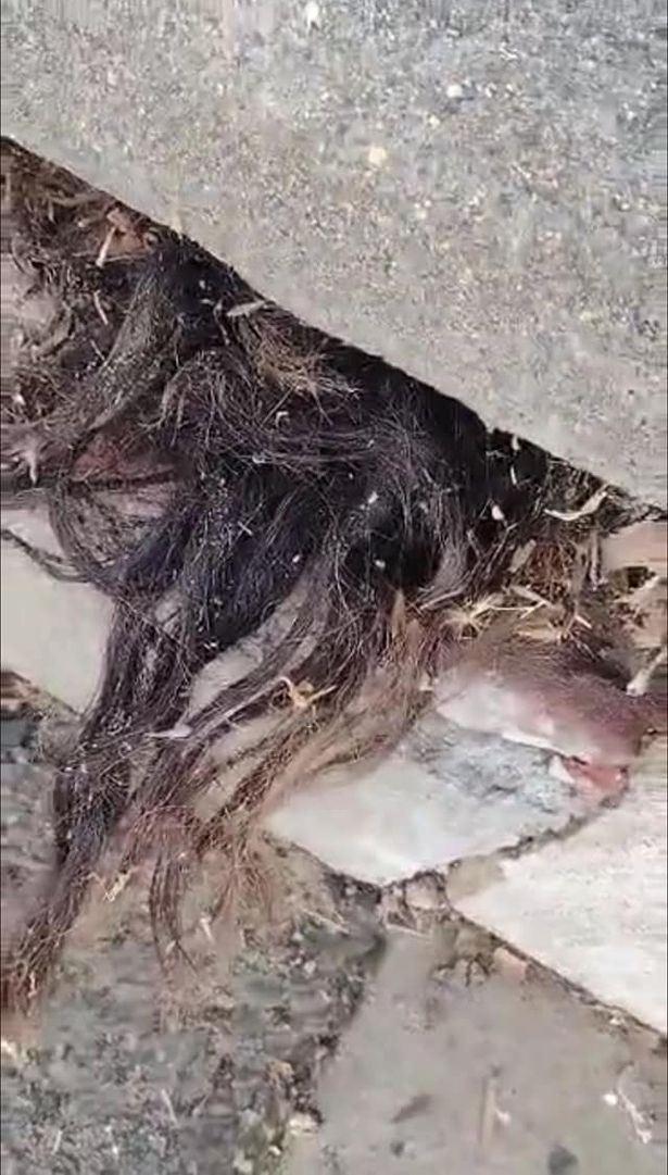 lelaki jumpa rambut menjalar keluar dari celah batu nisan kubur lama