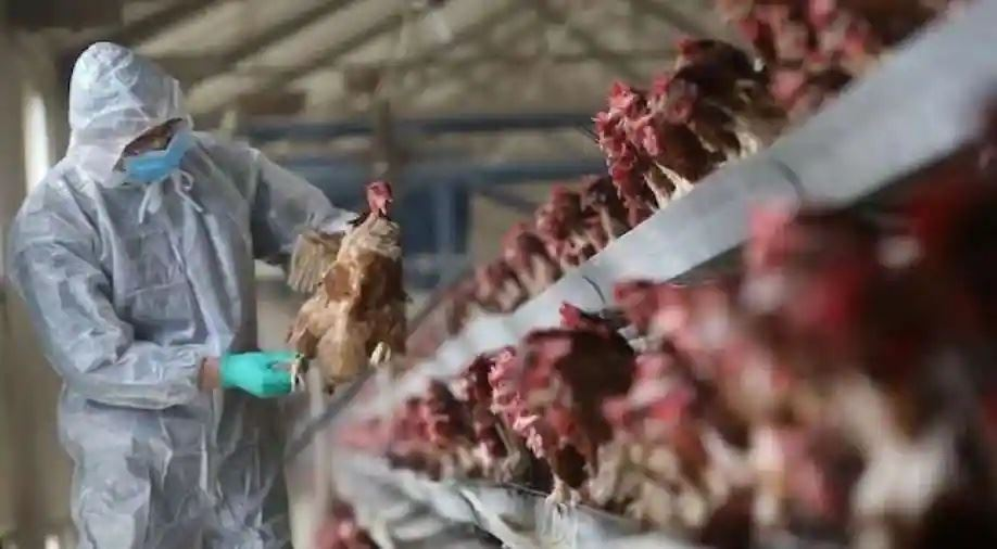 kes pertama selesema burung h10n3 jangkiti manusia di china