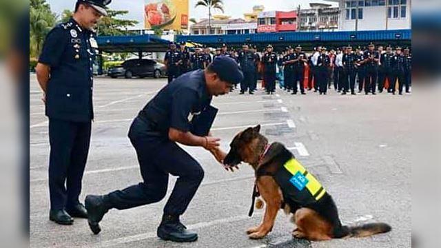 anjing pengesan dianugerahkan pingat penghargaan