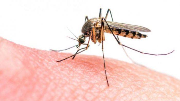 biarkan nyamuk hisap darah, aktivis tak benarkan nyamuk dibunuh
