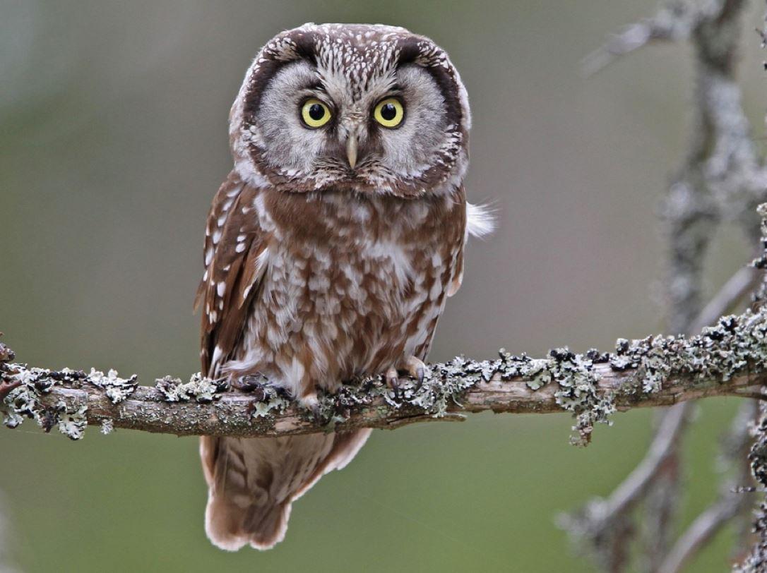 6 jenis haiwan yang mempunyai pendengaran paling tajam