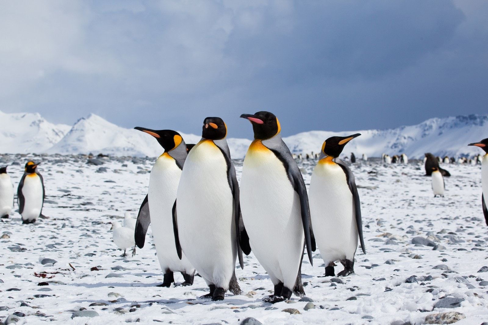 sekumpulan saintis percaya penguin mungkin adalah makhluk asing