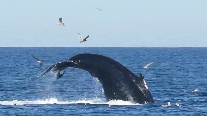 bagai mati hidup semula, lelaki 'ditelan' ikan paus