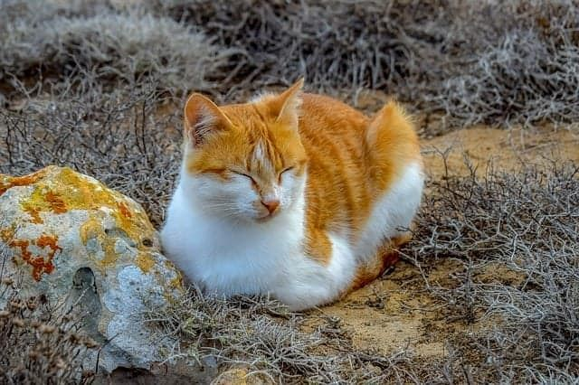 bukan pemalas, ini rupanya alasan kenapa kucing asyik tidur