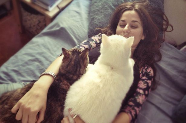 ini antara sebab-sebab kena kucing kita mengiau tanpa henti