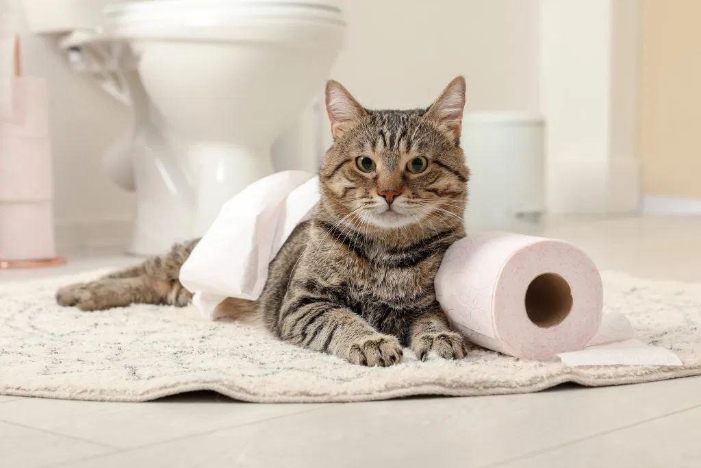 ini adalah punca kenapa kucing suka ikut kita masuk tandas!