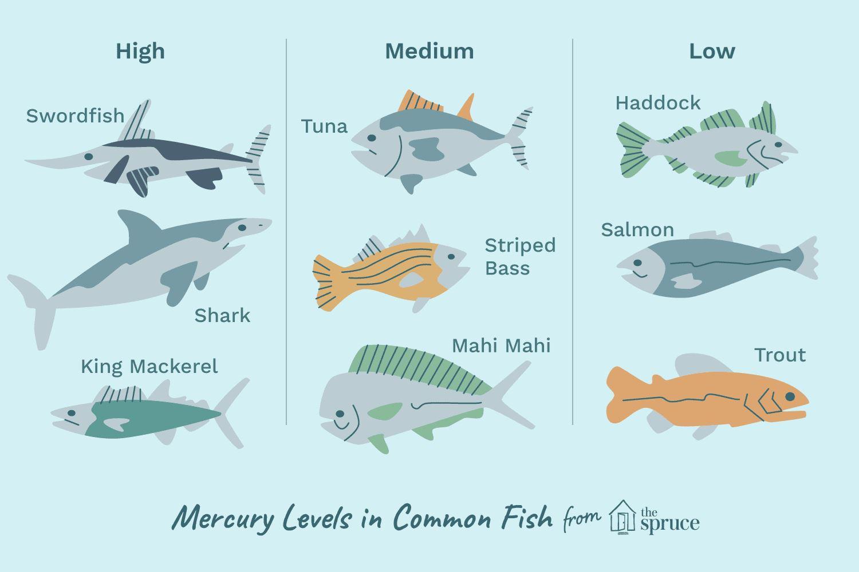 hati-hati, makanan laut pun boleh ada kandungan merkuri tanpa kita sedar!