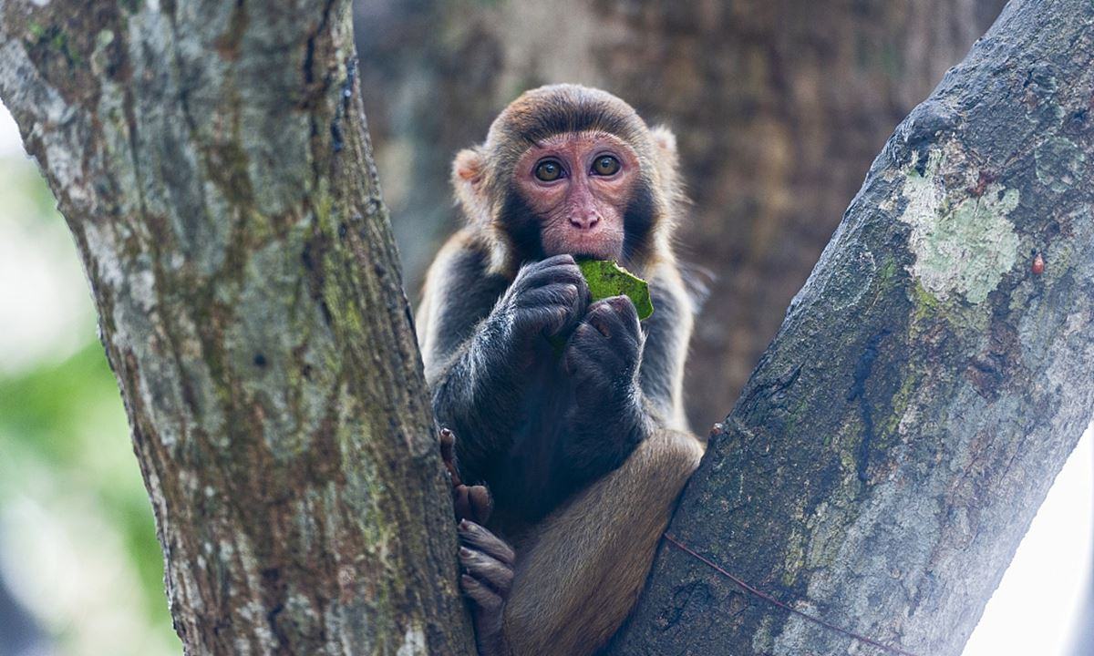 virus monkey b sebabkan kematian pertama manusia, ini yang anda perlu tahu