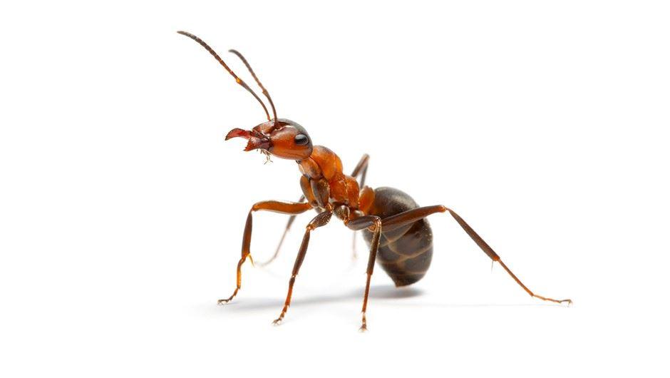 angkara semut, pesawat tergendala 3 jam lewat berlepas