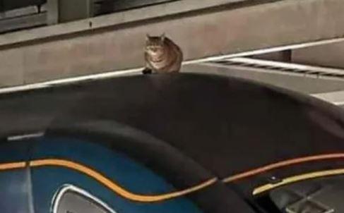 punca kucing duduk atas bumbung, kereta api terkandas lebih 2 jam