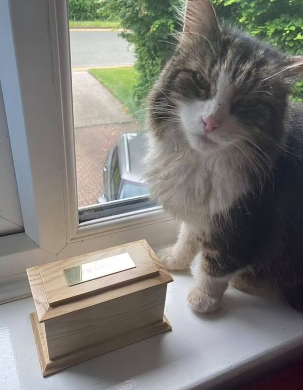 kucing yang ditemui mati, kembali ke rumah beberapa hari kemudian