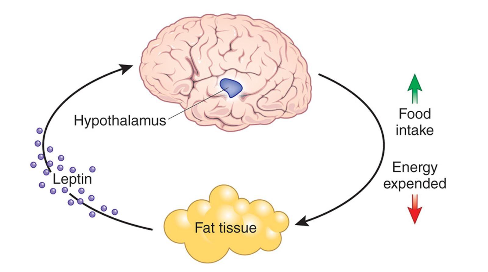 dah puas cuba bermacam cara, tapi berat badan tetap naik? ia mungkin sebab hormon!