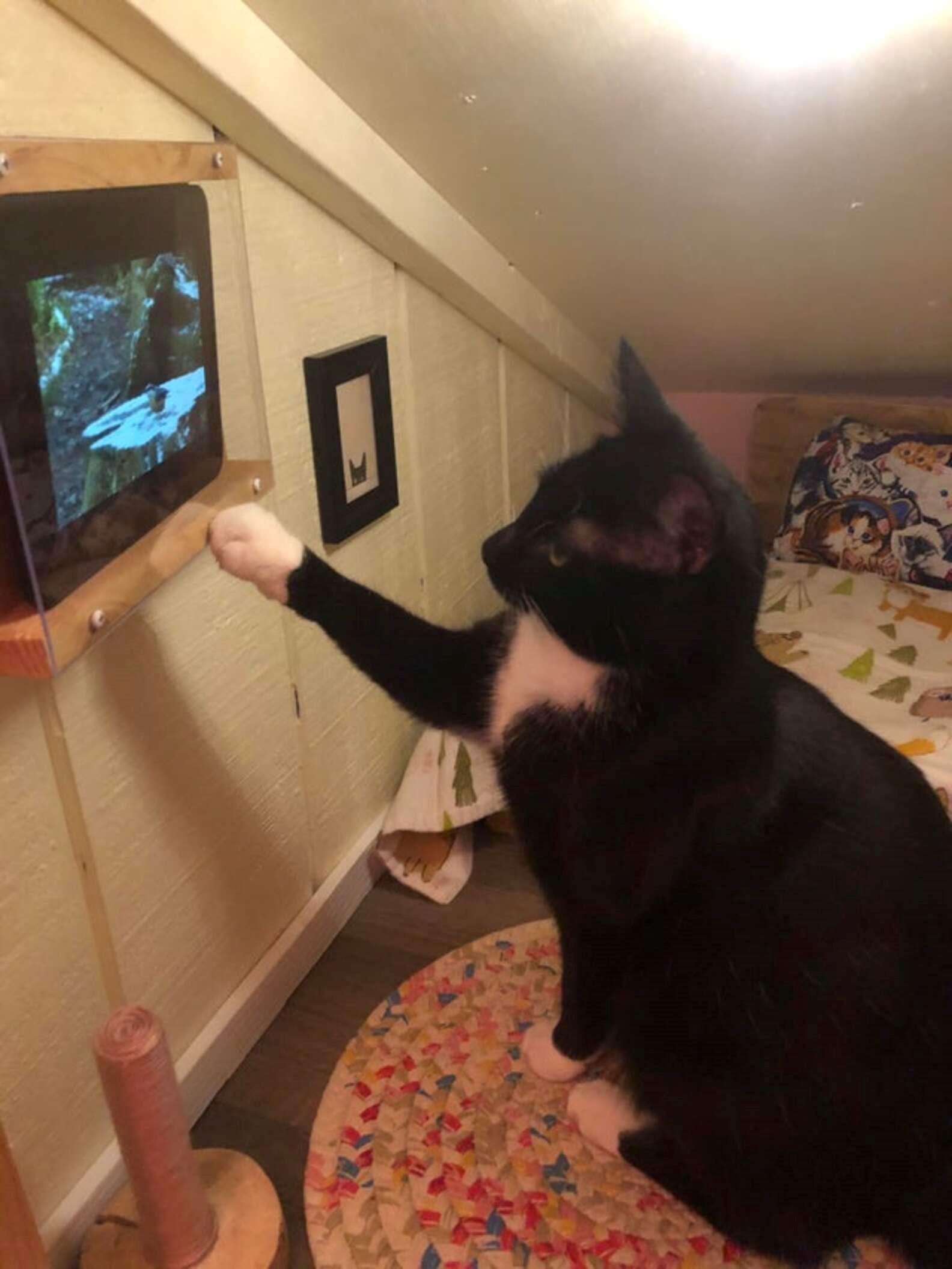 lelaki bina bilik tidur untuk kucing kesayangan, siap ada tv!