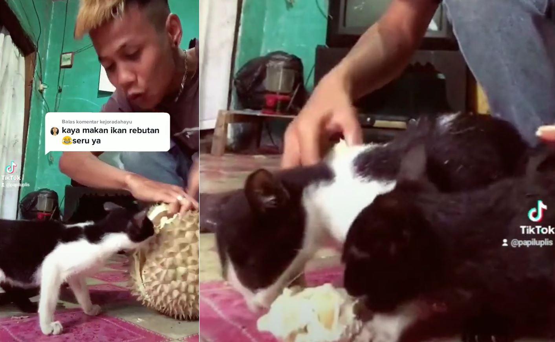 kucing terlampau suka durian sampai kena berebut dengan tuannya