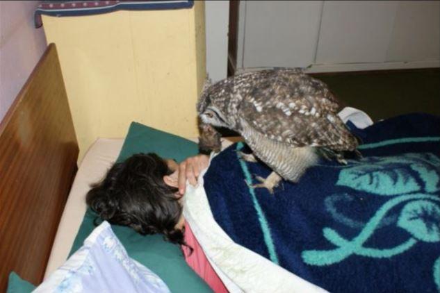 tanda berterima kasih, burung hantu bawa 'hadiah' pada penyelamatnya