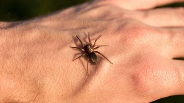 terpengaruh filem, remaja sengaja biar digigit labah-labah demi jadi spider-man