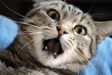 kajian dapati kucing tertekan tuan sentiasa ada di rumah masa pandemik