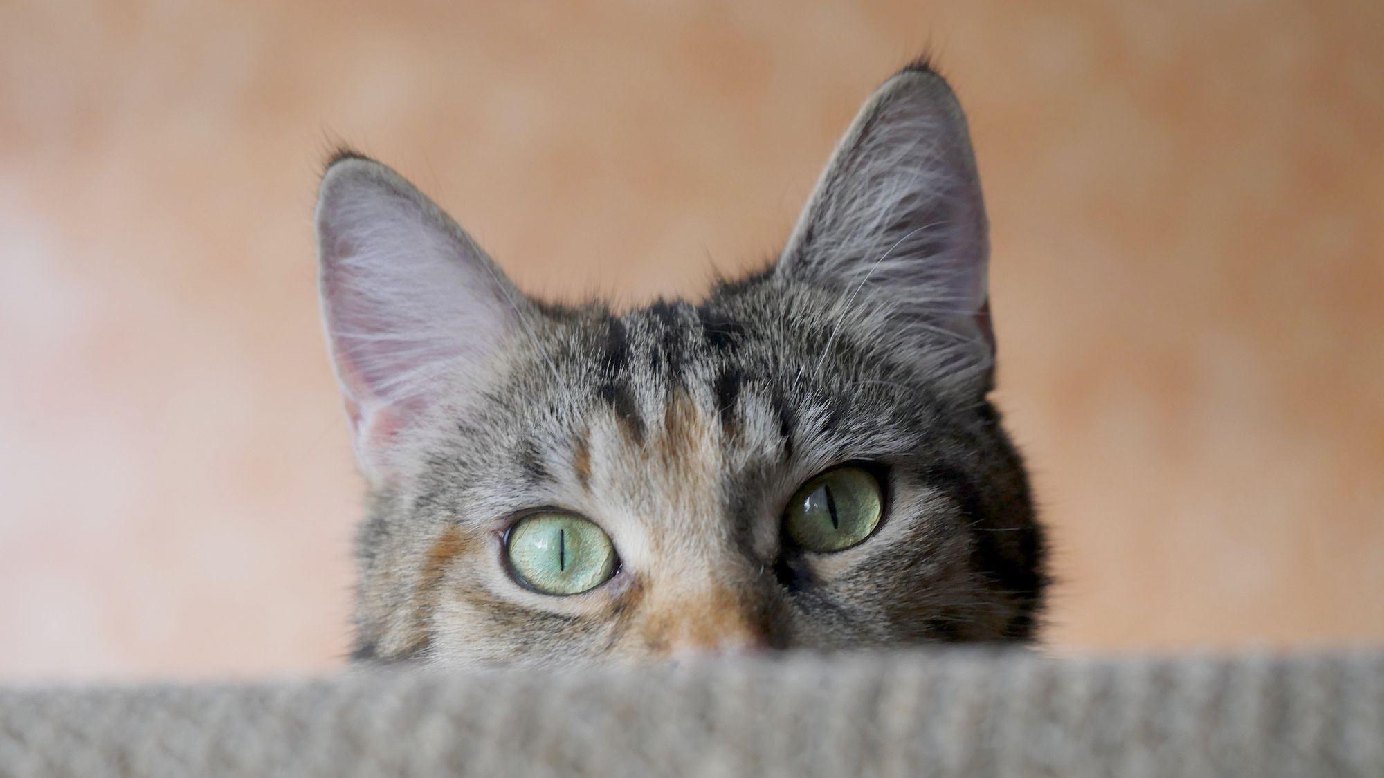 hanya kucing sahaja boleh dengar bunyi dari video ini. jom try!
