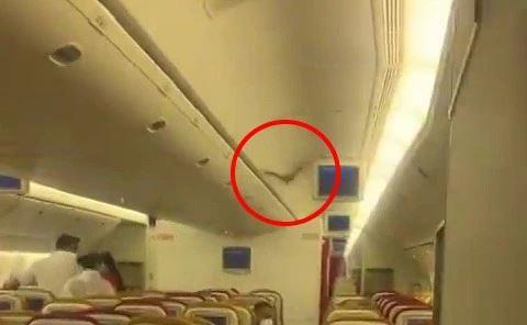 pesawat terpaksa patah balik lepas kelawar terbang dalam kabin