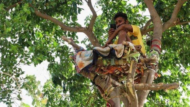 demi lindungi keluarga, pemuda kuarantin kendiri di atas pokok