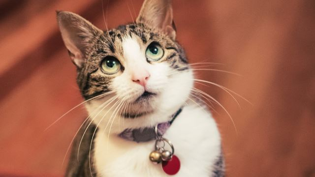 si kucing yang mengirim surat
